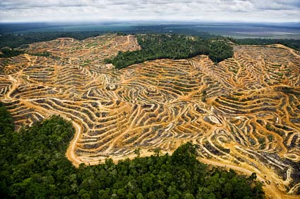 Deforestation makes way for a palm oil plantation. This site is in Sarawak, Borneo, Malaysia.